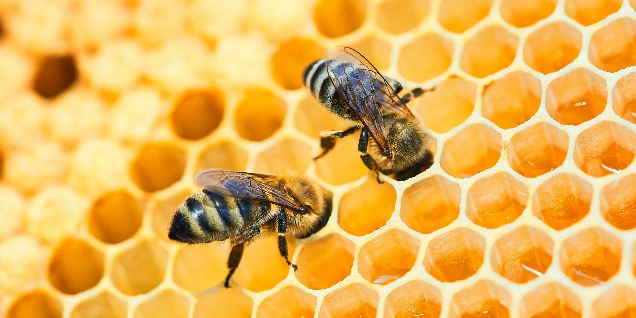 Kala iPszczoły – edukacyjny cykl video